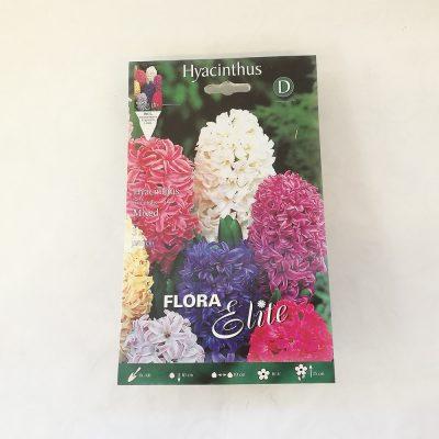 hyacinthus hijacinte 3